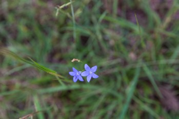 Smallest of Flowers.