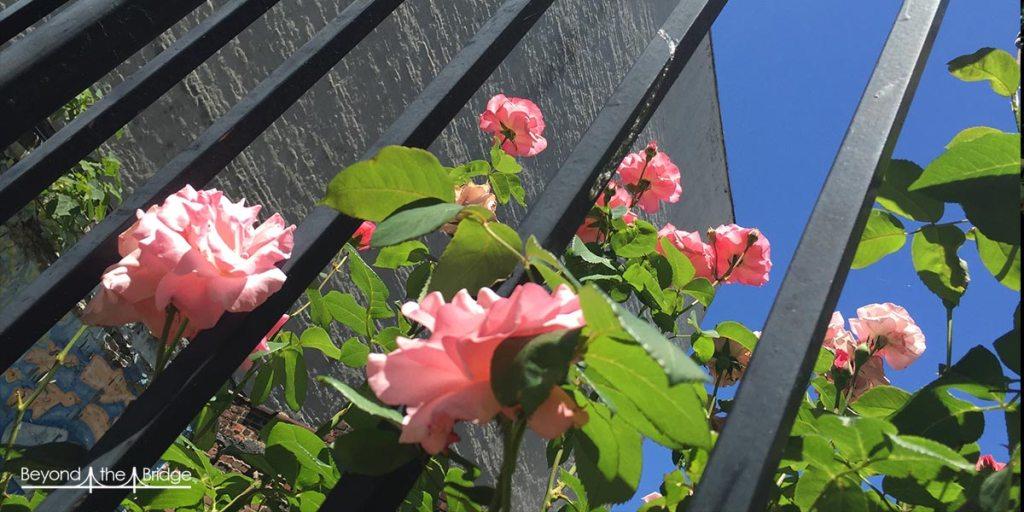 Jardinscommunautaires_illustr1