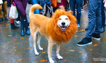 Halloween Dog Parade : extravagance et folie douce !