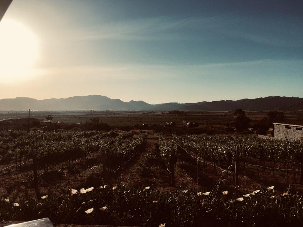 Winery Wanderings in Valle de Guadalupe