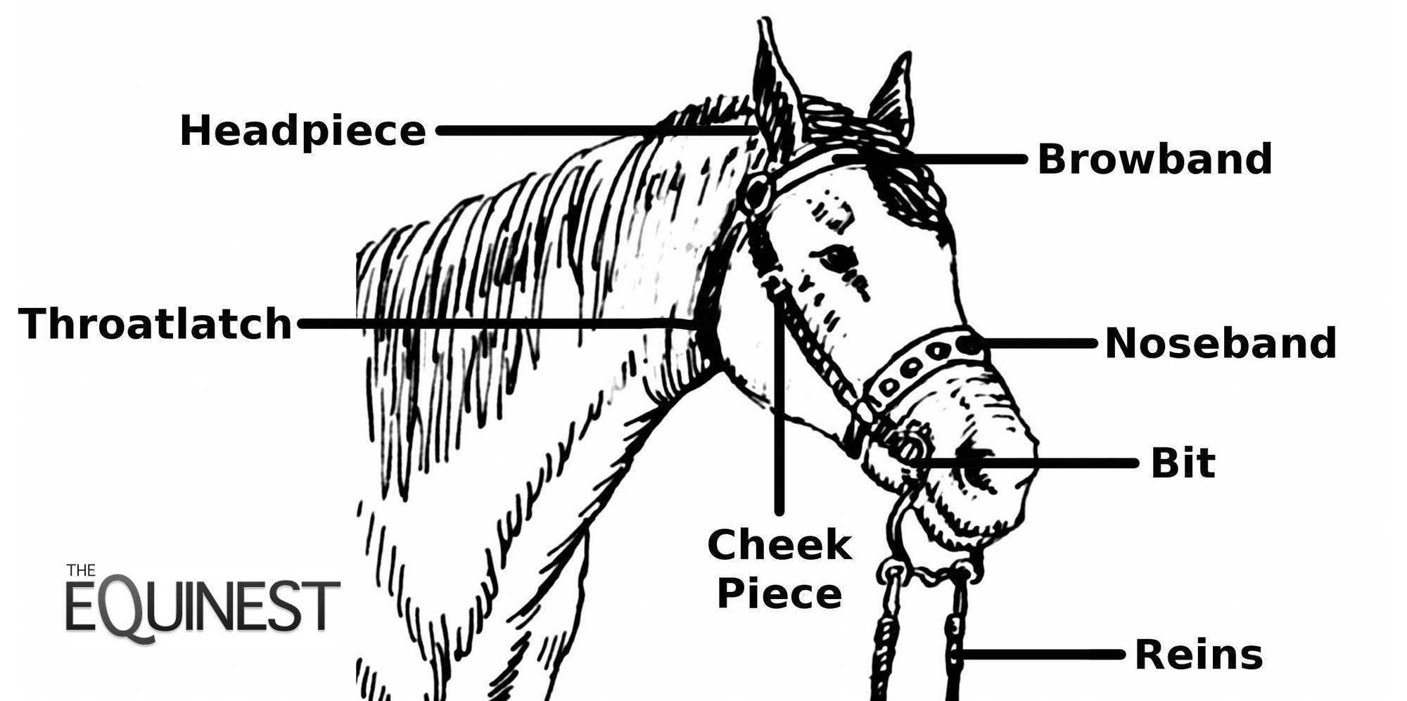 Parts Of A Bridle Beyond The Saddle