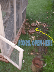 foxes open here