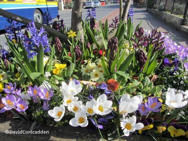 Spring colour in a street planter