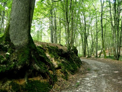 An old lane through the woods, worn down through the slope