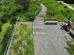 A boardwalk through the wetland sets out from a stone island
