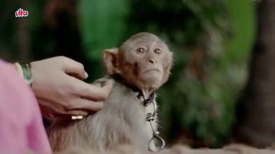 Badshaah (the monkey)- Yeh Hai Chakkad Bakkad Bumbe Bo