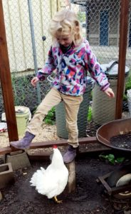 chicken_technology_addie_sunshine_shoes_edited