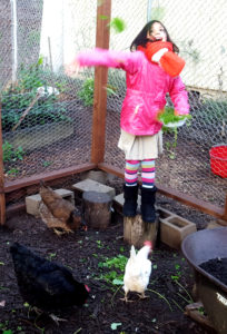 chickens_maezy_tossleaves_edited