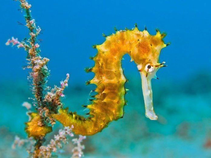 OK Divers Bali potapanie