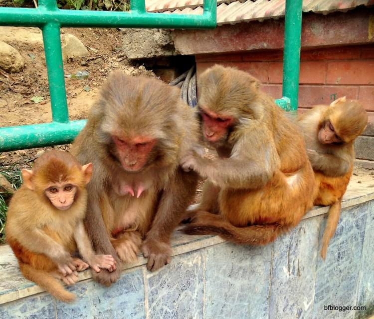 Monkeys at Swayambhunath, Kathmandu