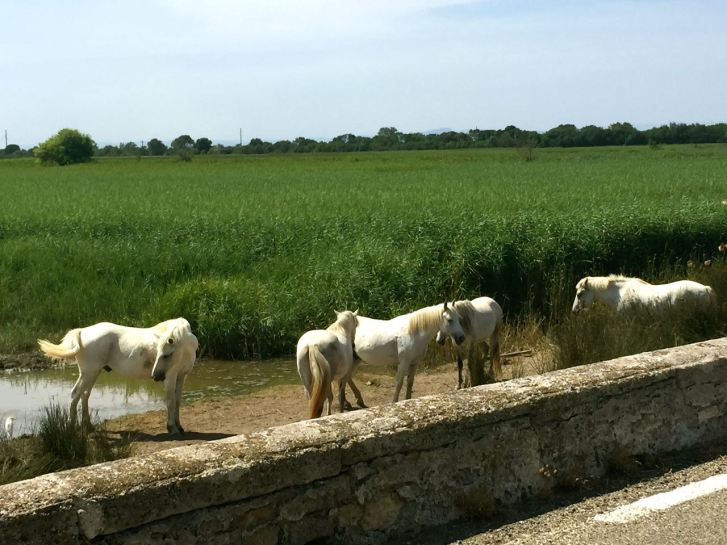 visiting the camargue