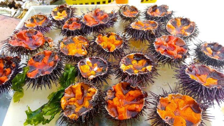 urchin 2