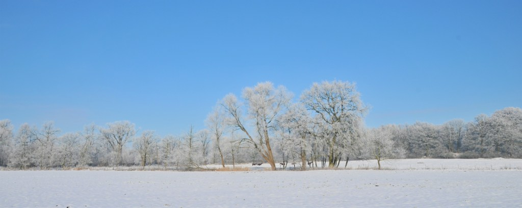 Winterlandschaft Hansdorfer Brook