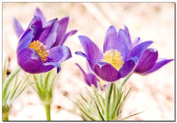 фото весенних цветов картинки большого размера фото ...