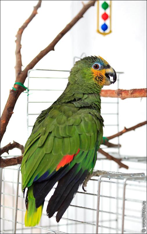 Фото высокого разрешения Зеленый попугай