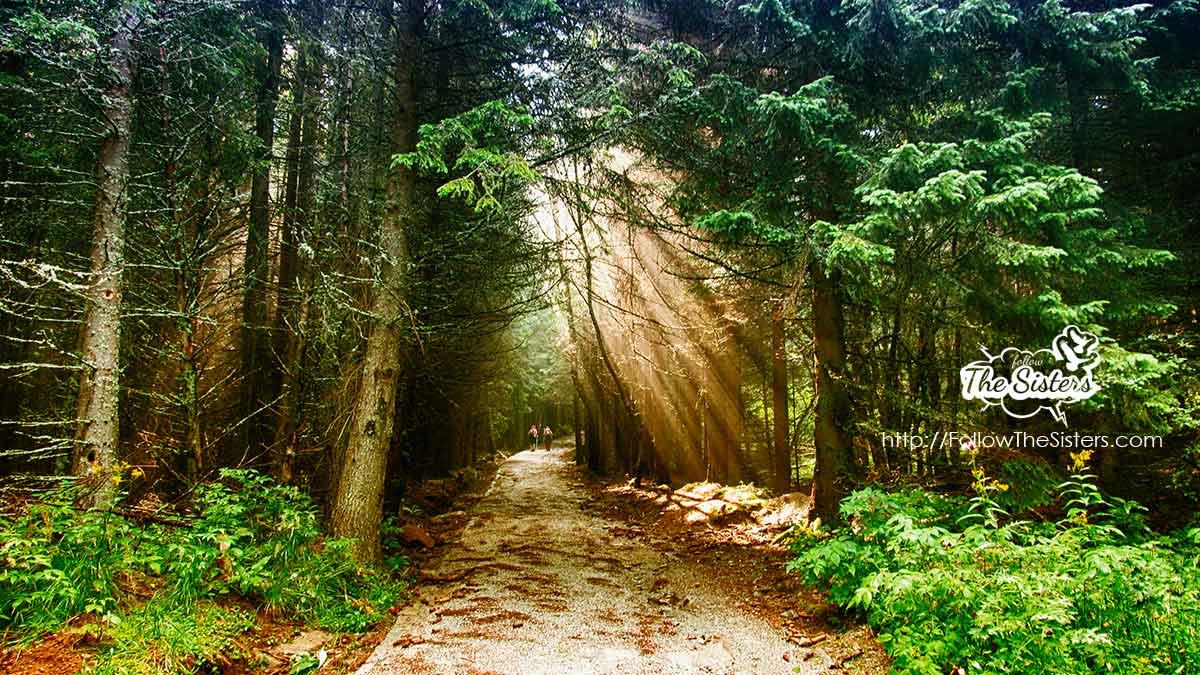Светлини-по-пътя-към-Черни-връх