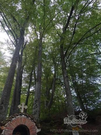 Шестте бука при аязмото на Клисурски Манастир
