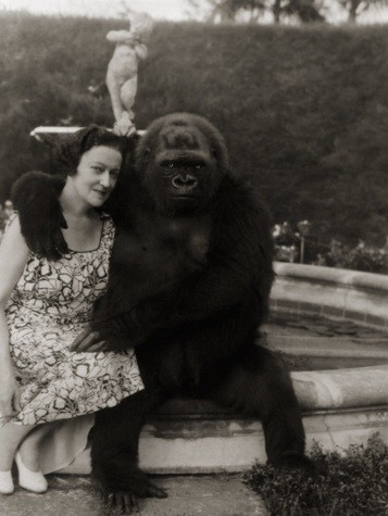 Mrs. E. Kenneth Hoyt, of havana, cuba, acquired the gorilla in 1932 when he was three months old. (National Geographic, 1940)