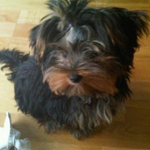 Sookie cumple un año