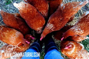 Black Duck Ranch farm tour