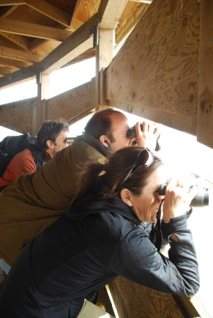 Ecologists observing snow geese (Cap Tourment Migratory Bird Refuge, Quebec)
