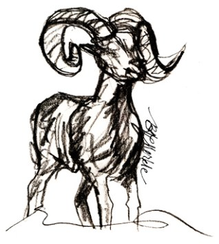 Old sketches of bighorn sheep ram_cr