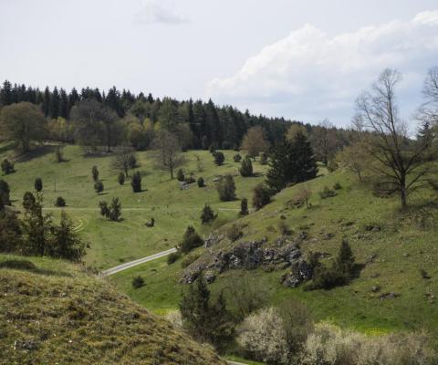 Das Naturschutzgebiet Zwing