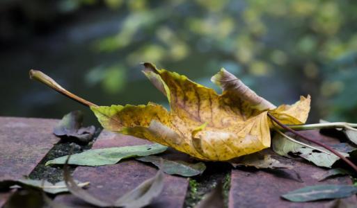 Blätter fotografieren – nicht nur im Herbst interessant