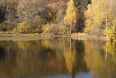Боянското езеро