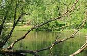 Парк Дендрариум