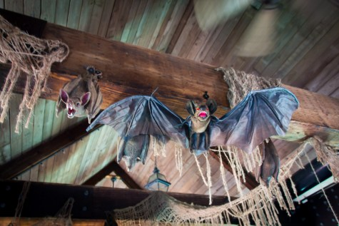 A closer look at some of the bats on Le Scoot's bridge