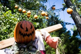 In addition to the scarecrows, the jack-o-lanterns have been hung overhead once again this year as well