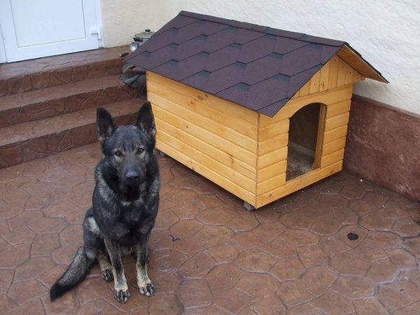 Вольер для собаки своими овчарка – фото с примерами, как ...