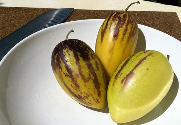 Арбузик томат – Помидор Арбузный — описание сорта с фото ...