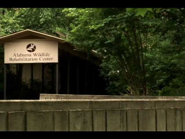 Alabama Wildlife Center partnership with Oak Mountain State Park another reason to support State Parks Amendment 2