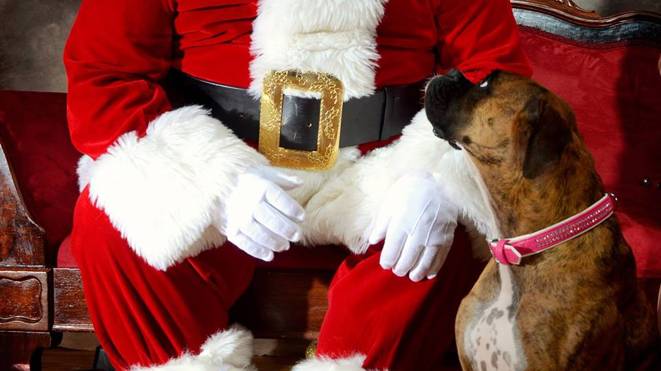 You Can Bring your Fur Child to Meet Santa