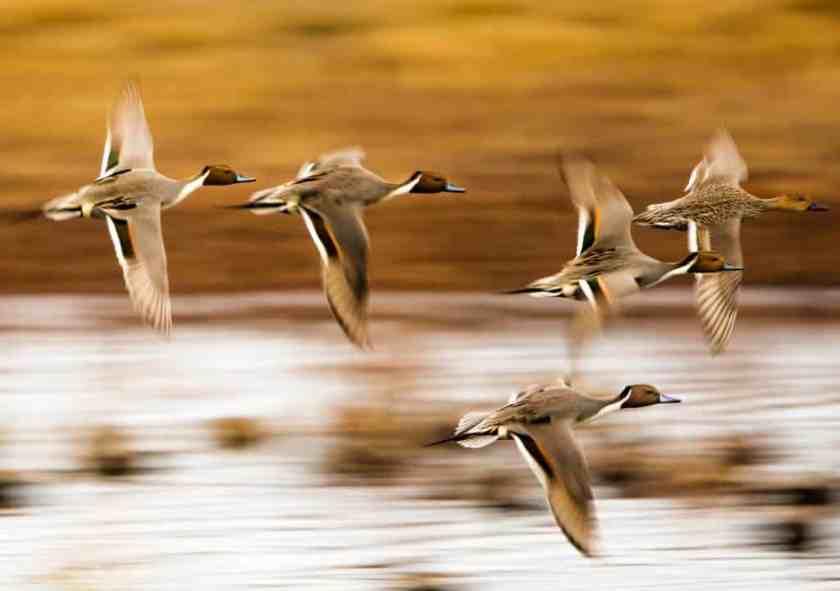 Wheeler National Wildlife Refuge - photo by George Lee