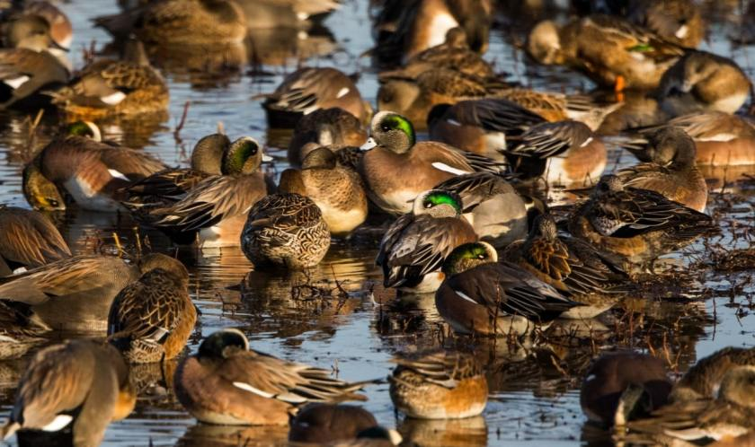 Ducks at the Wheeler National Wildlife Refuge - photo by George Lee