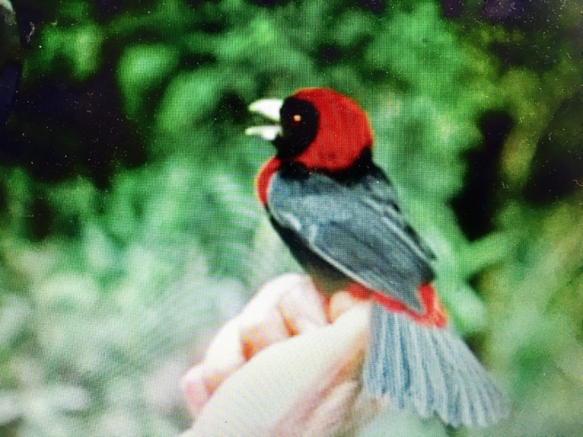 Birmingham Audubon Alabama