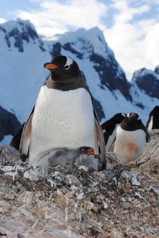 Fresh from the bottom of the world – Antarctica adventures of UAB's Jim McClintock