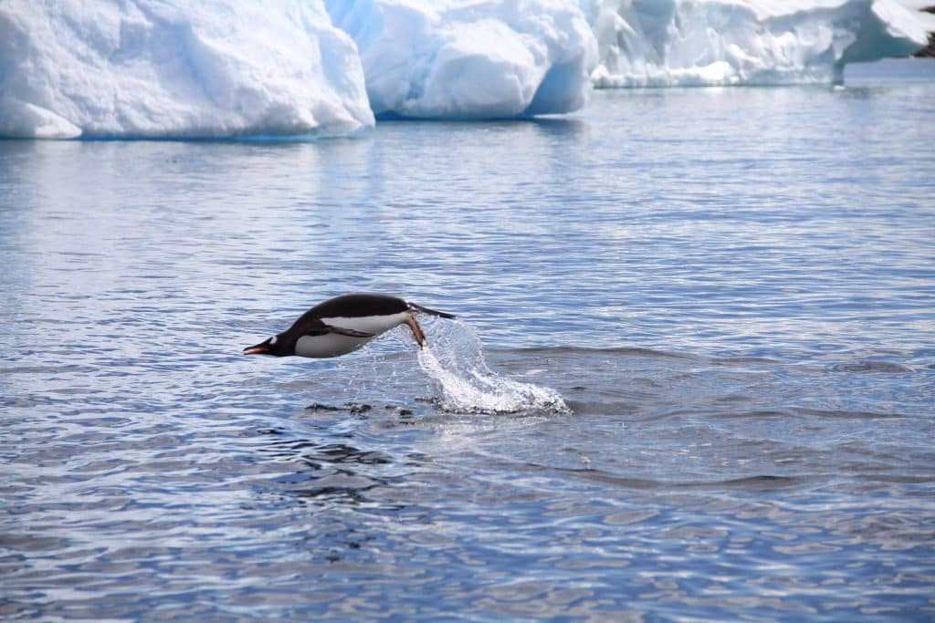 Exclusive: Stunning photos from Antarctica by UAB's Jim McClintock