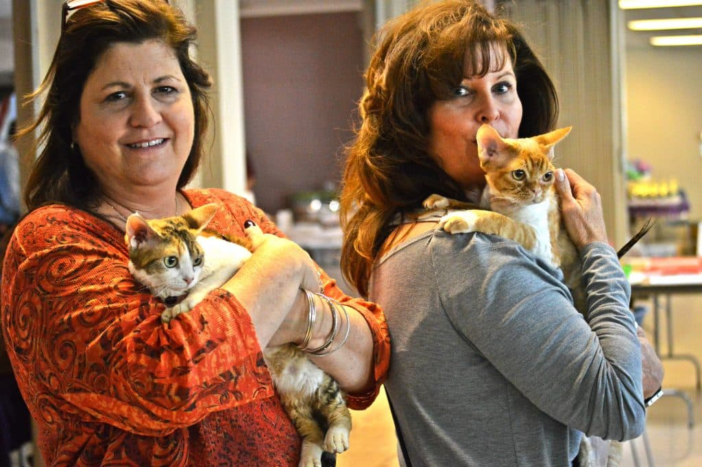 Your new BFF – 45th Annual Birmingham Feline Fanciers Cat Show