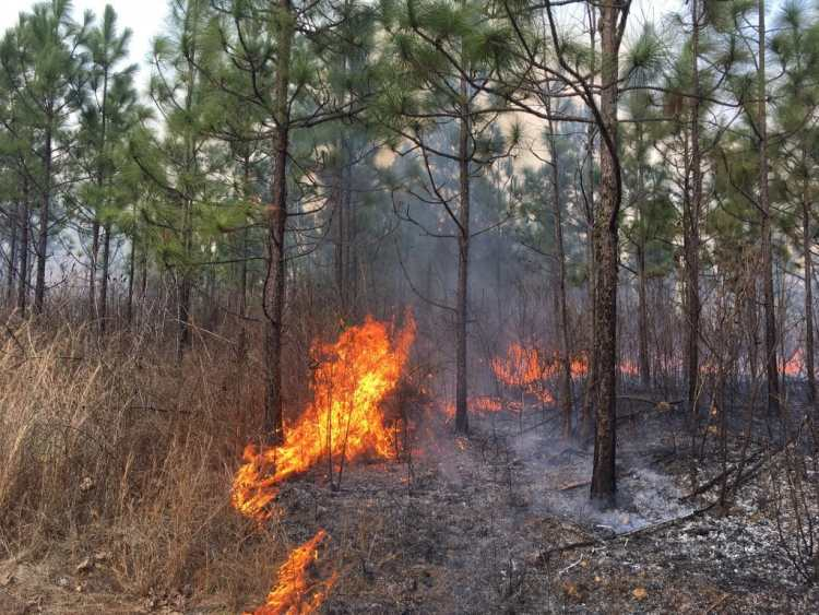 Bibb County Alabama