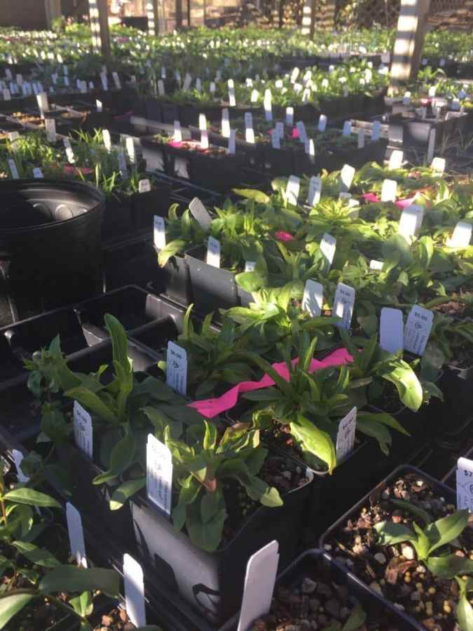 Volunteers preparing thousands of plants for Birmingham Botanical Gardens Spring Plant Sale