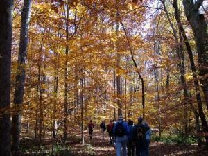 Birmingham walking trails