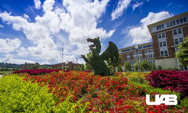 14 classes in Birmingham you can totally get college credit for