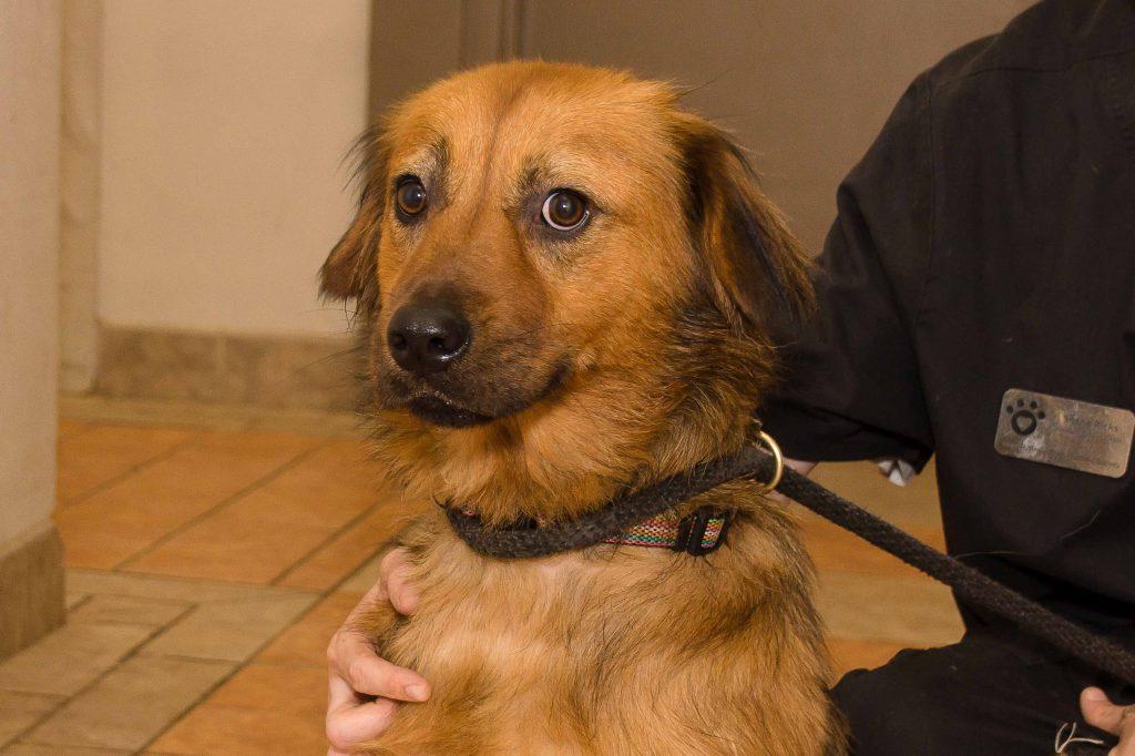 Adorable and Adoptable Pet of the Week: Nala