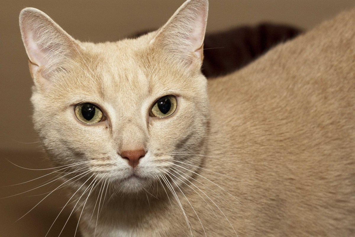 Adorable and Adoptable Pet of the Week: Aubie