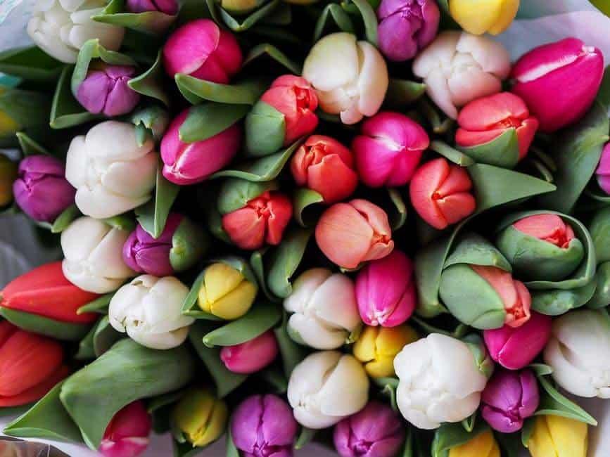 Guide to Birmingham Florists