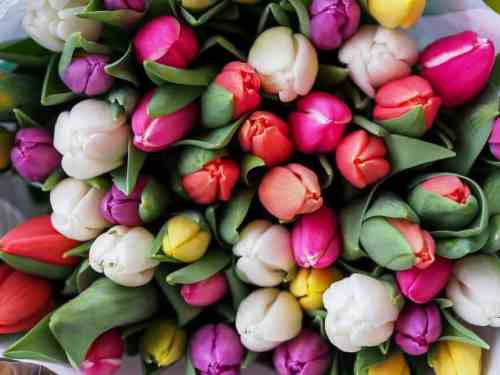Birmingham Florists